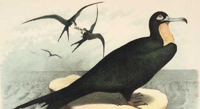 北美鸟类版画