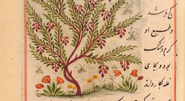 法拉的自然百科全书