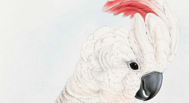 鹦鹉绘本图册
