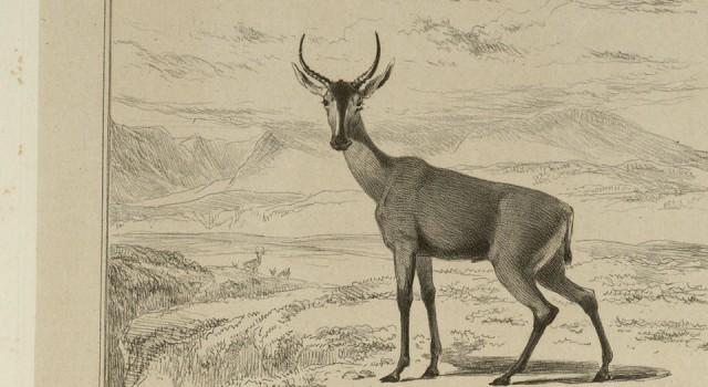 南非动物与风景速写