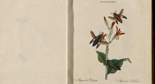 中国昆虫自然史