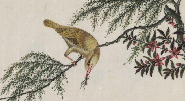 中国自然历史绘画
