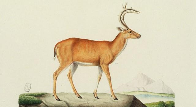 哺乳动物自然史插图
