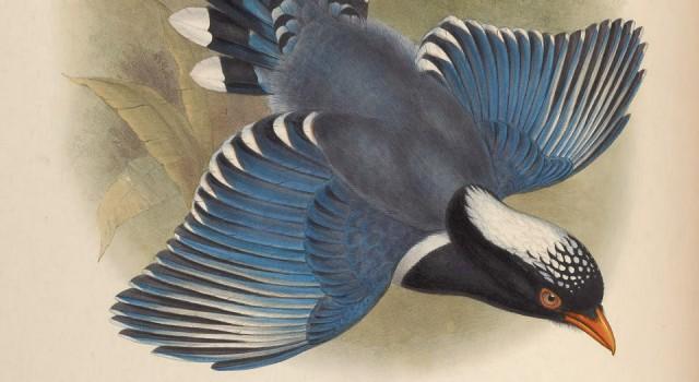 亚洲鸟类版画