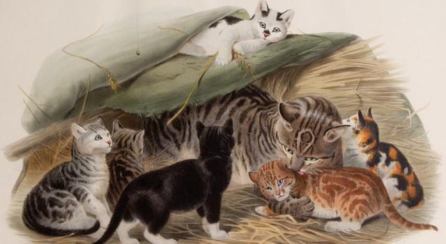 猫科动物图鉴