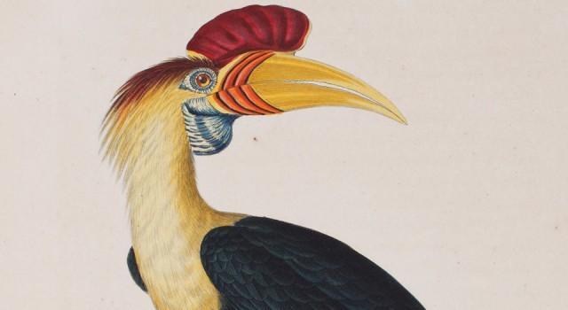 彩绘鸟类版画新集