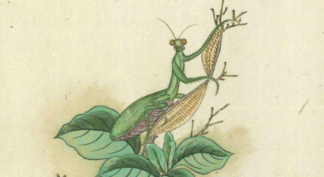 金石昆虫草木状