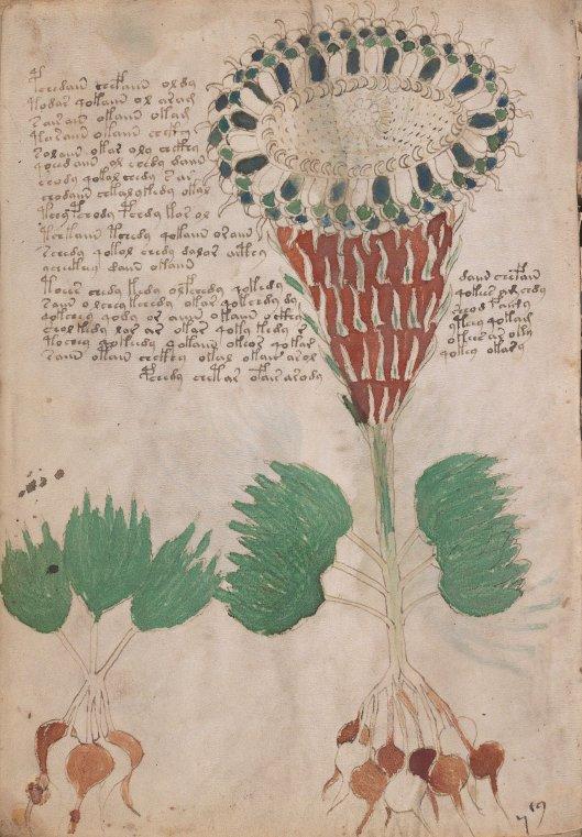 voynich-manuscript10