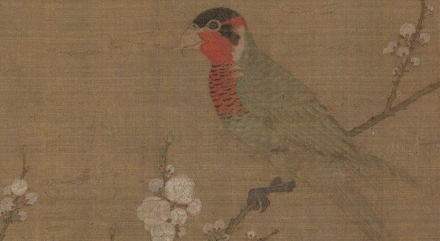 五色鹦鹉图